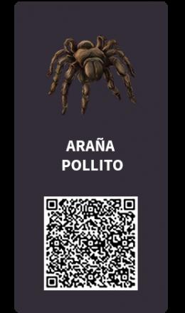 Tarjetas_Aran_a_pollito