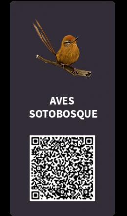 Tarjetas_Aves_sotobosque