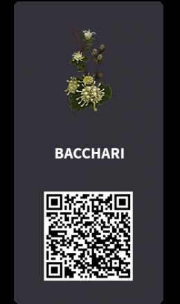 Tarjetas_Bacchari
