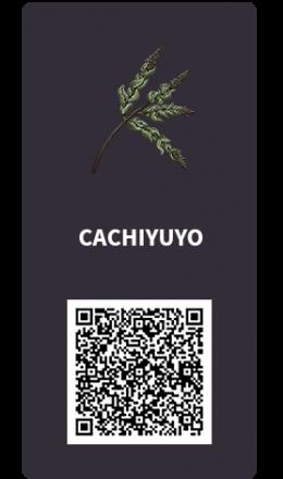 Tarjetas_Cachiyuyo