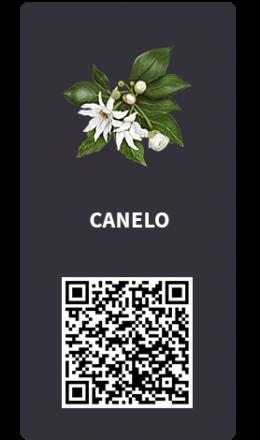 Tarjetas_Canelo