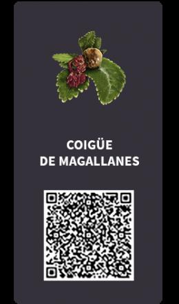Tarjetas_Coigue de Magallanes_OK QR