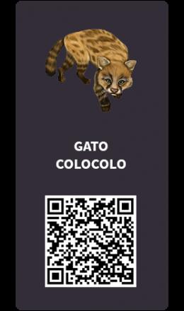 Tarjetas_Gato-colocolo
