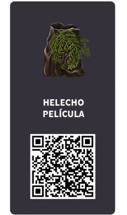 Tarjetas_Helecho Pelicula