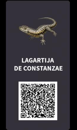 Tarjetas_Lagartija de Constanzae