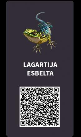 Tarjetas_Lagartija_Esbelta