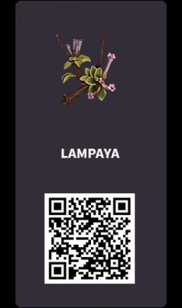 Tarjetas_Lampaya