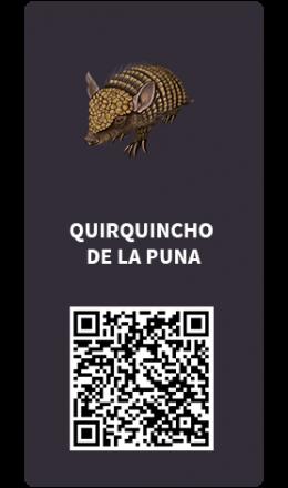 Tarjetas_Quirquincho-de-la-Puna
