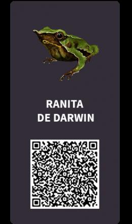 Tarjetas_Ranita_darwin