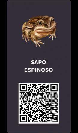 Tarjetas_Sapo-espinoso