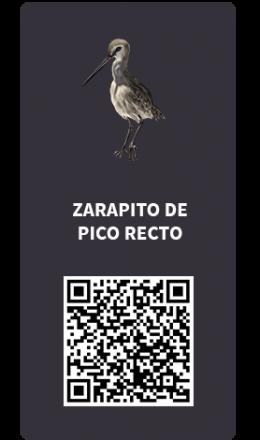 Tarjetas_Zarapito pico recto