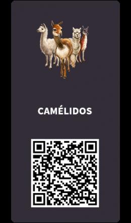Tarjetas_camelidos